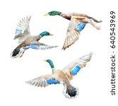 watercolor set   flying wild... | Shutterstock . vector #640543969