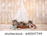 Stock photo little cute kittens in a sailboat with ocean theme 640547749