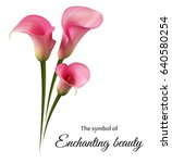 realistic pink calla lily. the... | Shutterstock .eps vector #640580254