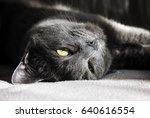 cute grey cat | Shutterstock . vector #640616554