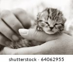 Homeless animals series. Tiny kitten in the hands of his foster carer. Black and white image