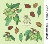 collection of shea  shea nut... | Shutterstock .eps vector #640646614