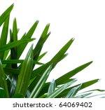 Fresh Palm Green Leaf Isolated...