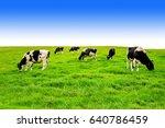 cows on a green field.   Shutterstock . vector #640786459