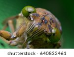 close view of cicada insect | Shutterstock . vector #640832461