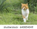 Domestic Cat In The Garden