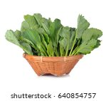 chinese kale vegetable isolated ... | Shutterstock . vector #640854757