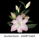 illustration with lily flowers...   Shutterstock .eps vector #640871665