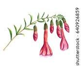 flower branch of cantua... | Shutterstock . vector #640926859