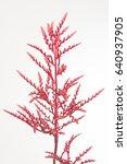 bromelia rood | Shutterstock . vector #640937905