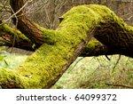 Bright Green Moss  Bryophytes ...