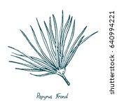 papyrus leaf  cyperus papyrus ...