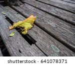 dead leaf on lonely pathways | Shutterstock . vector #641078371
