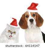 Stock photo portrait of a cat and dog in red christmas hats isolated on a white background 64114147