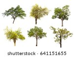 set of six green summer trees... | Shutterstock . vector #641151655
