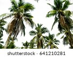 Coconut Trees On White...