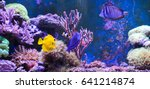 Reef Tank  Marine Aquarium Full ...