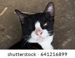 Stock photo cat just woke up and open one eye 641216899