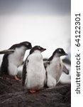 Group Of Penguins Having Fun...
