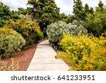 Path Among Yellow Bushes