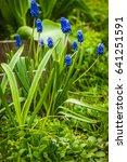 image of fresh spring flower...