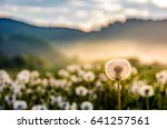 dandelion in foggy valley. countryside landscape in mountains at sunrise. gorgeous springtime weather - stock photo