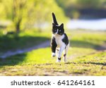 Stock photo cute cat fun running on green sunny meadow 641264161