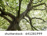 green natural background of... | Shutterstock . vector #641281999