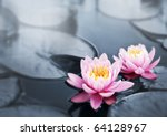 Pink Lotus Blossoms Or Water...