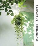 Small photo of Dischidia nummularia Variegata in a hanging pot.
