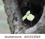 small sprouting plant with... | Shutterstock . vector #641313565