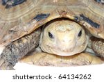 animal turtle tortoise isolated in white background - stock photo