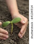 sprout in child hand   Shutterstock . vector #64134514
