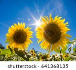 Pair Of Sunflowers With Sun...