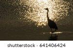 mythical bird bathing in sun... | Shutterstock . vector #641406424