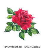 Red Rose With Leaves....