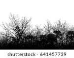 Dry Tree Branch Isolated On...