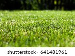 grass with dew drops | Shutterstock . vector #641481961