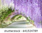 Wisteria Tunnel At Kawachi Fuj...