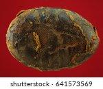 thai amulet  buddha images | Shutterstock . vector #641573569