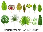 different tropical leaves on... | Shutterstock . vector #641610889