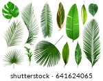 different tropical leaves on... | Shutterstock . vector #641624065