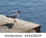 seagull standing on the beach | Shutterstock . vector #641633629