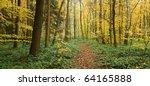 Autumn forest in foggy morning - stock photo