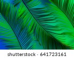 tropical summer background  ... | Shutterstock . vector #641723161