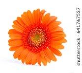 orange gerbera flower on a... | Shutterstock . vector #641767537