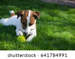 young dog lies on the grass and ... | Shutterstock . vector #641784991