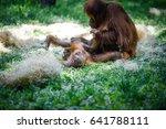 tenderness moments between a... | Shutterstock . vector #641788111