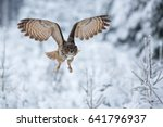 Eurasian Eagle Owl  Bubo Bubo ...
