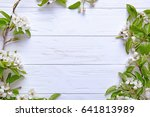 tree branches with blooming... | Shutterstock . vector #641813989